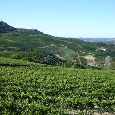 Barolo, yet another view