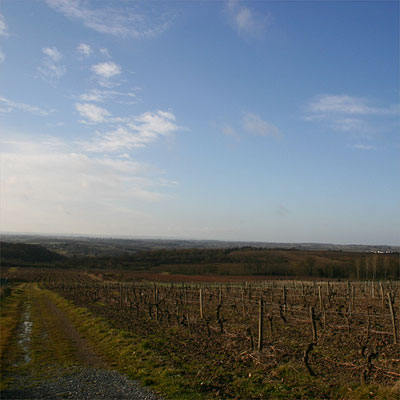 vineyard of Domaine de Juchepie