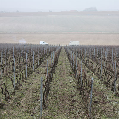 Looking down from Le Mont Benoit vineyard