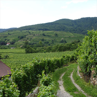 Hirtzberger's terraced vineyards in Spitz